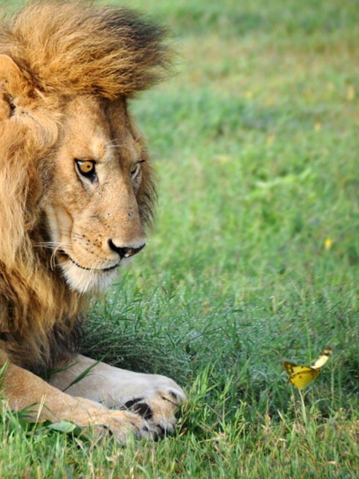 Приколы лев картинки, день