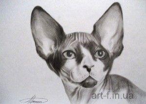 рисунок сухой кистью, кот сфинкс