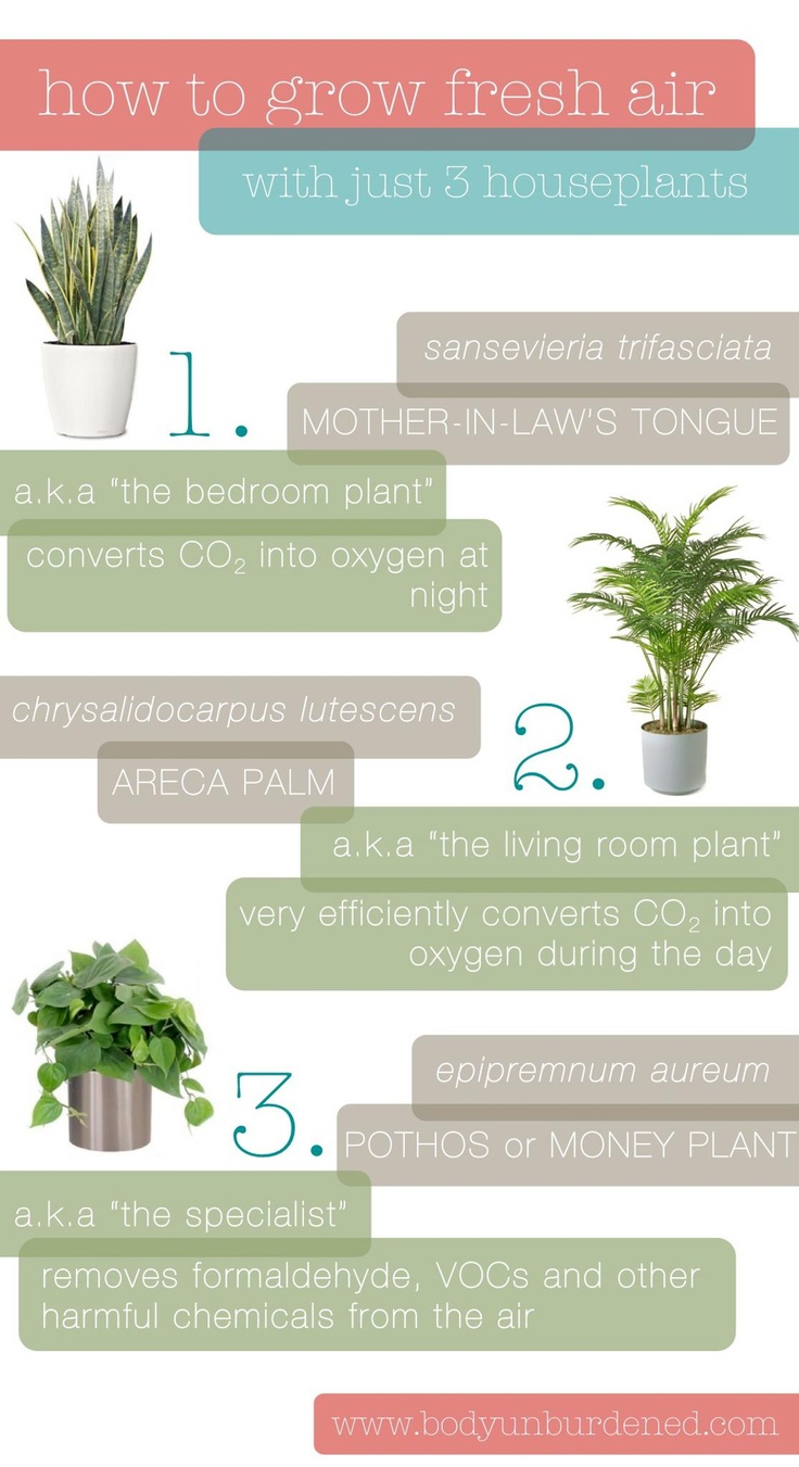 how to grow clean air  @Oransi and #EarthDay and #PinToWin