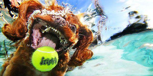 Desafio Criativo: As Exuberantes Fotografias dos 'Cães Subaquáticos'. Uma Série que é Sensação Mundial!