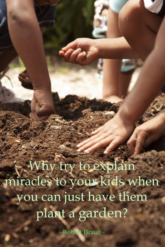 creating a family friendly garden miracles in the garden includes fun gardening ideas for kids