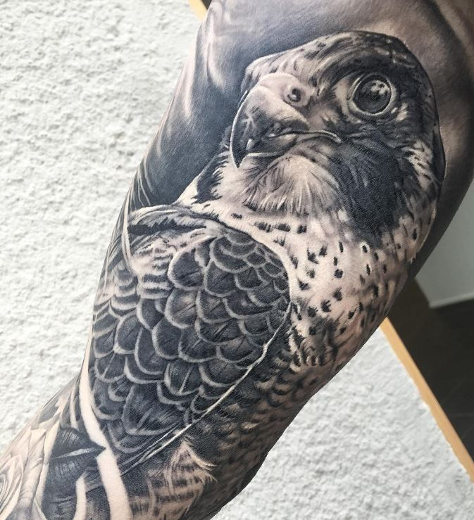 Great Falcon Tattoo
