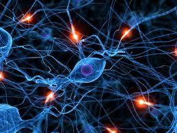 Quando se forma uma memória, o espectador incorpora suas próprias reações e inferências sobre o evento. Como resultado, o espectador pode colorir ou distorcer a memória a partir do início. Outras distorções podem ocorrer quando uma memória é recuperada.