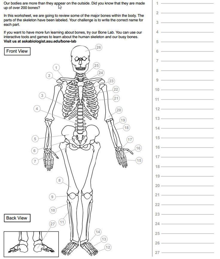 31 Best Skeleton Images On Pinterest