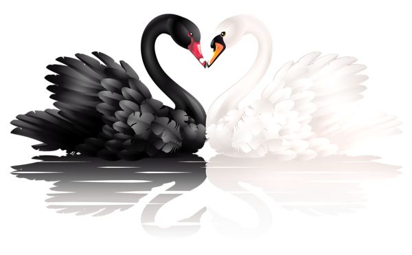 White and Black Swans with Heart Shape PNG Clipart