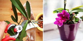 Nejjednodušší způsob jak doma rozmnožit orchidej!