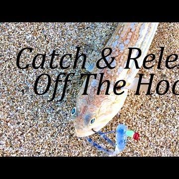 Catch & Release!  #fishing#flyfishing#fishingtrip#fishingislife#fishingboat#fishingdaily#fishingday#fishingtime#fishingaddict#fishingrod#fishingvillage#fishingpole#fishinglures#fishinggear#fishinggirl