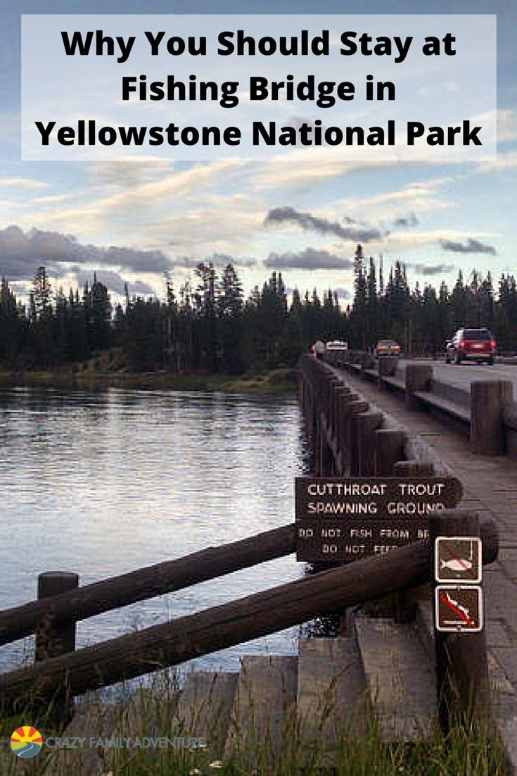 Fishing Bridge is an awesome place to stay with your family when you visit Yellowstone. There is a lot to see and do but it isn't as crazy as Old Faithful and Canyon.