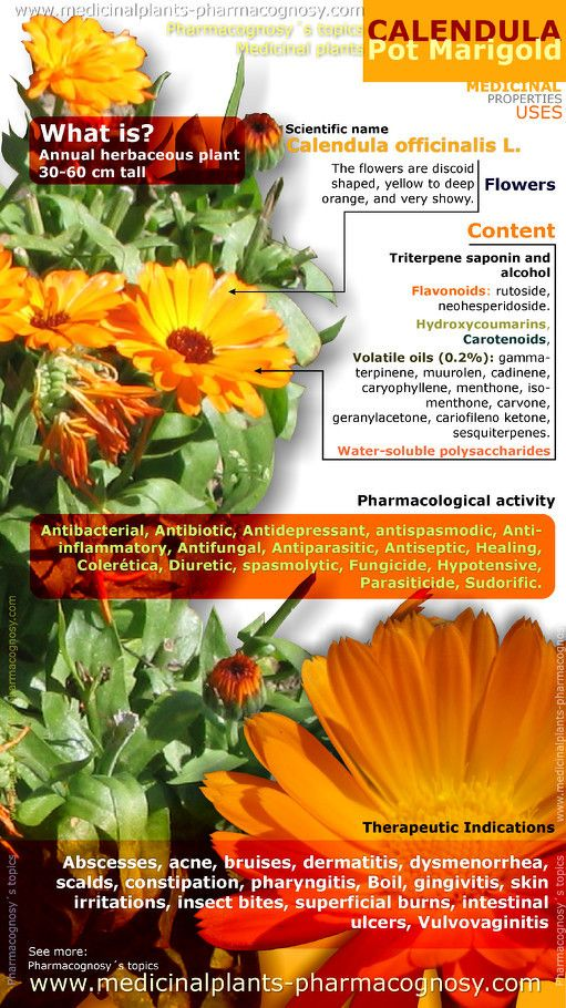 Calendula pot marigold health benefits