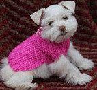 Dog jumper Cat jumper Mini SCHNAUZER puppy  Tiny dog por CUTIEDOG, £12.50
