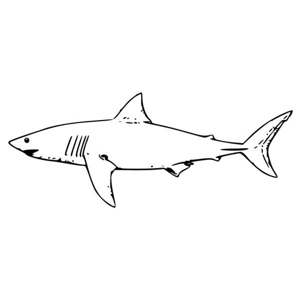 lemon shark kids coloring pages activities ocean animals coloring picture free kids coloring pages