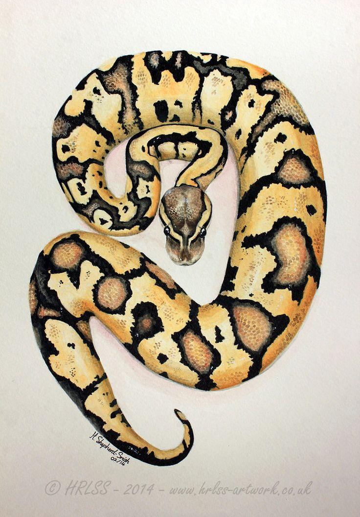 ball python painting google search art inspiration pinterest ball python. Black Bedroom Furniture Sets. Home Design Ideas