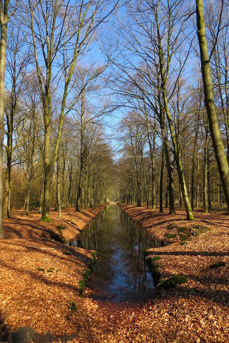 2015-03-08 Mooi rabattenbos op de terugweg naar kasteel Eerde
