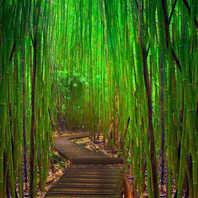 Hana Highway Bamboo Forest in Maui. Been here beautiful!!