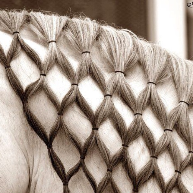 mane hair styles 59 best braiding your horses mane and or images on 5694