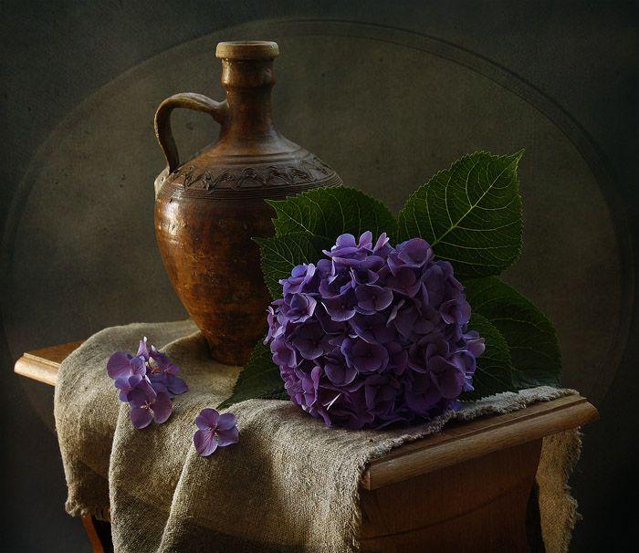 photo: натюрморт с сиреневой гортензией ▩photographer: inna korobova