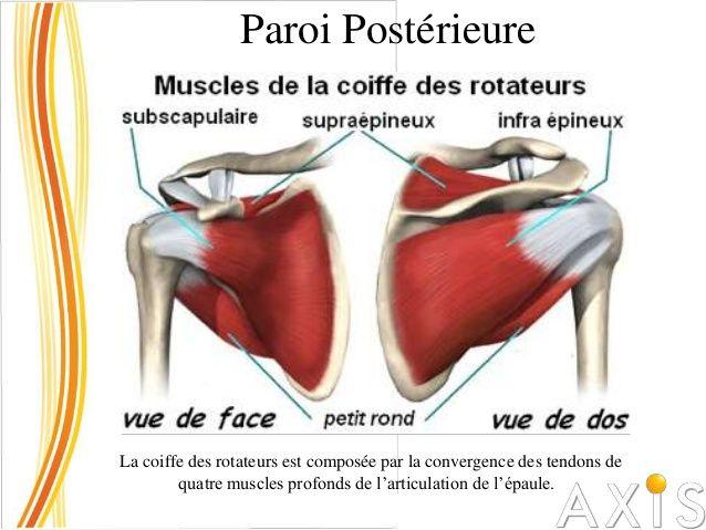 Paroi latérale Muscle grand dorsal Origine Partie claviculaire : tiers latéral du bord antérieur de la clavicule partie ac...