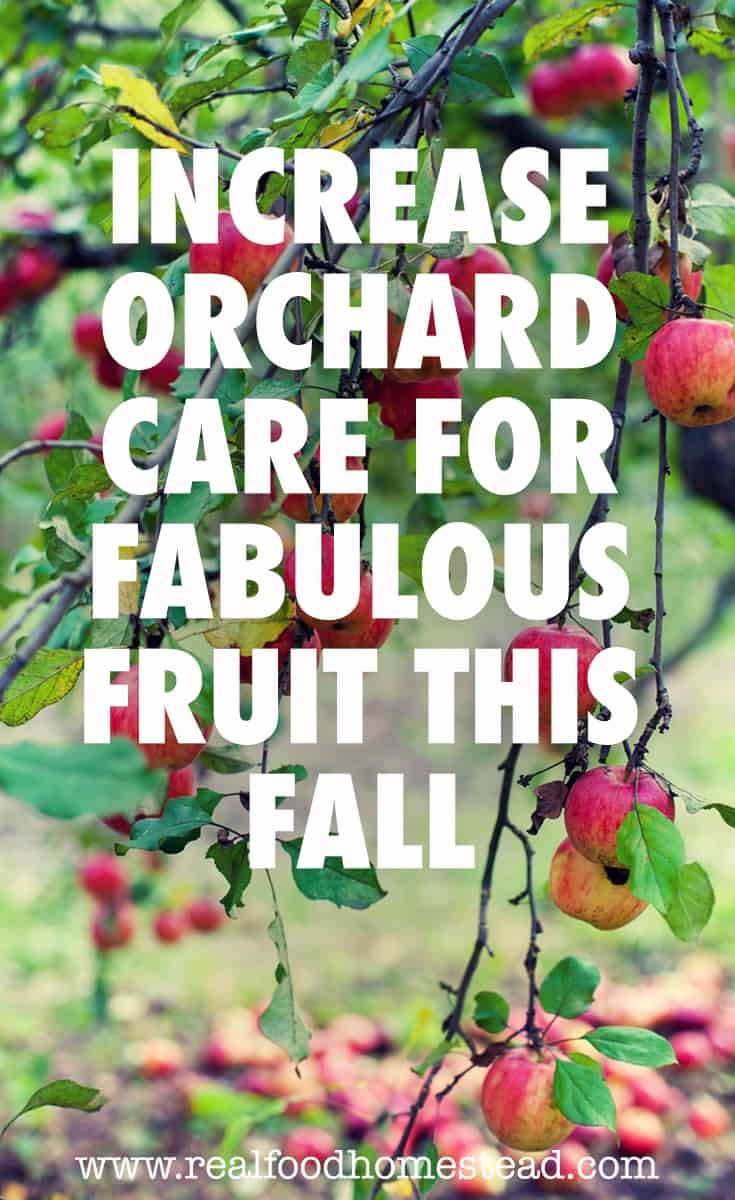 Do You Love The Idea Of Overflowing Fruit Trees In Your Own Orchard Planting Fruit Trees And Orchard Care Takes Time Planting Fruit Trees Orchard Fruit Trees