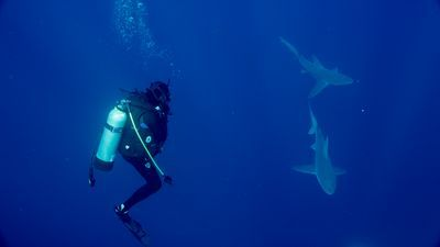 SHARK WEEK Featuring Great White, Alien Sharks Tonight on Discovery! (Video) | TVRuckus