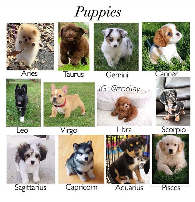 If this was true I would be the cutest thing alive-Capricorn