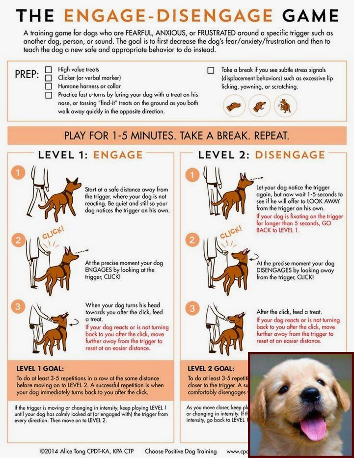 Dog Behavior Spray And Dog Behavior Hackles Raised Dog Training