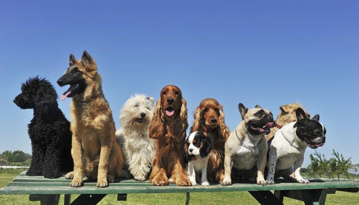 group-dog-training-photo