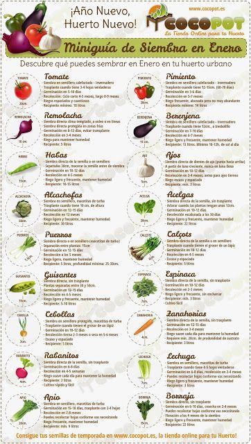Medicina Natural: Miniguía de Siembra en Enero