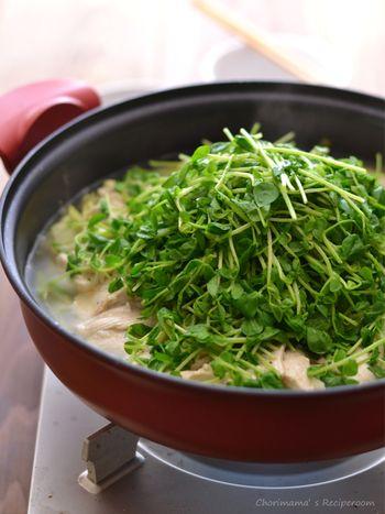 たっぷりの豆苗を合わせていただく「レモン鶏の白菜蒸し鍋」  塩とレモンの風味がどこかオリエンタルな雰囲気の蒸し鍋です。シメはリゾットに。