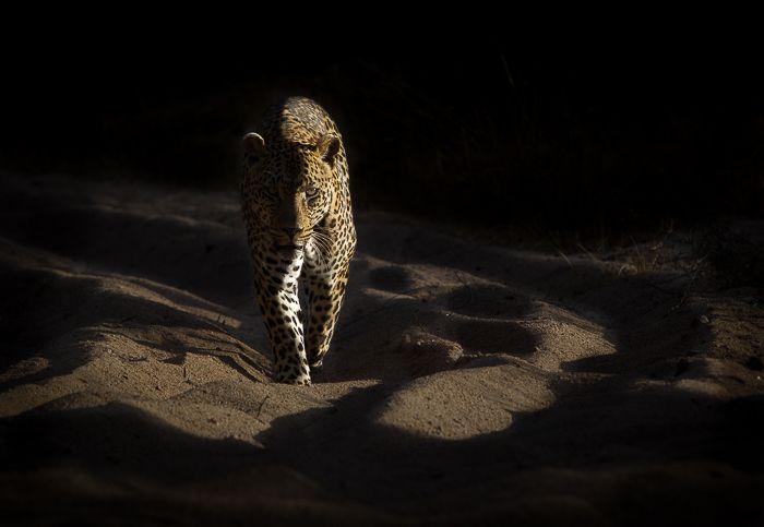 The Piva male. Photograph: Trevor Ryan McCall-Peat