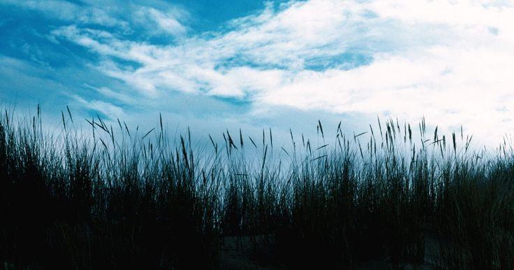 Los factores de la sucesión ecológica. La sucesión ecológica es el proceso por el que el ambiente cambia su estructura, en términos de especies residentes, en cierto período de tiempo. La sucesión ecológica tiene dos categorías, primaria y secundaria, que es lo que determina los tipos de factores involucrados. Esos factores en una sucesión ecológica son bióticos o abióticos. Los ...