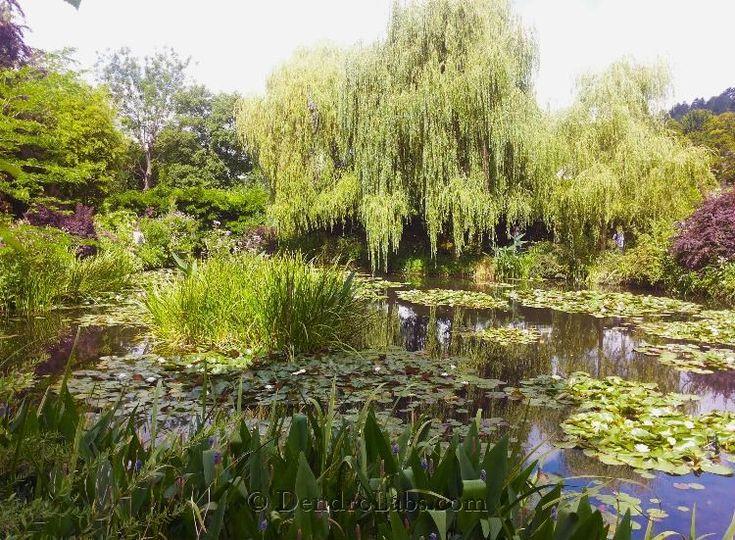 Il giardino di Monet a Giverny, un angolo di paradiso nel nord della Francia