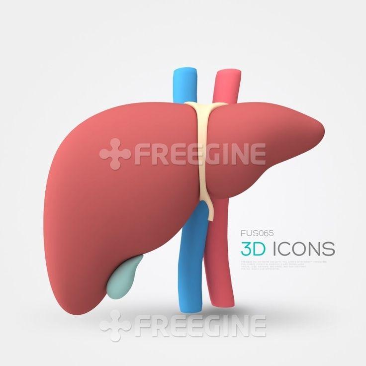 생물, 신체, 의학, 의료, freegine, 병원, 신장, 3D, 아이콘, 혈관, 간, 3D아이콘, 장기, 에프지아이, FGI, 해부학, fus065, 메디컬아이콘, fus065_007 #유토이미지 #프리진 #utoimage #freegine 16774278