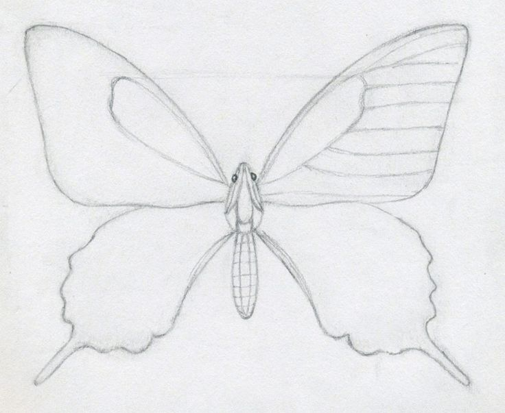 How To Draw A Butterfly Step By Step Easy Plus the body of a butterfly