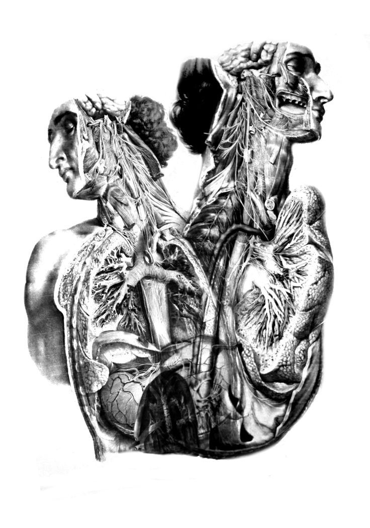 """""""Transfigurations"""", conjoined twins. Graphic 100*70cm, inspired by old anatomy books. Dedicated to searching of new concept of contemporary body."""