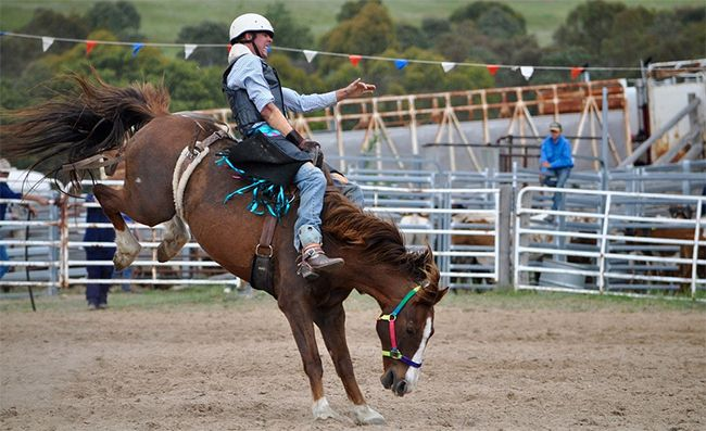bronc riding at the rodeo.
