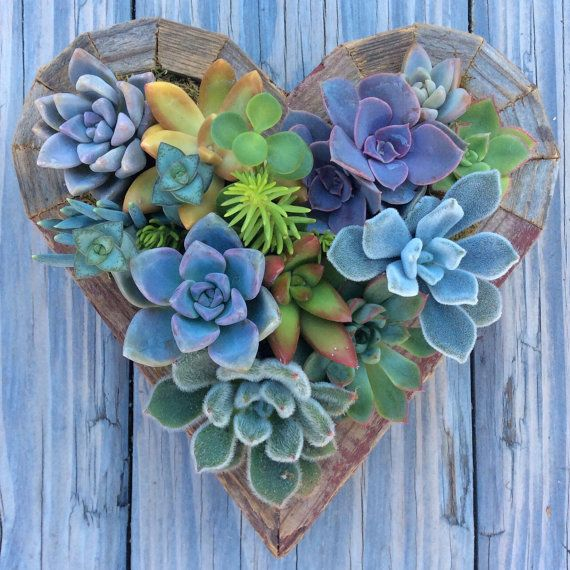 This listing is for a hanging succulent heart garden. Approximate Dimensions: 7 x 7    **Each planter is made to order and will be shipped