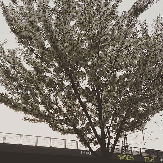 Fruhling In Der Stadt Es Bluht Immer Mehr Und Auch In Der Innenstadt Von Hamburg Steht So Mancher Baum In Voller Blute Ur Innenstadt Stadt Und Fruhling