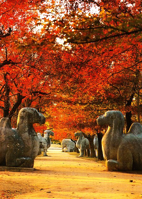 Spirit Path, Ming Xiaoling Tomb, Nanjing- ive been here even got to go on a camel too awhile to get on:)