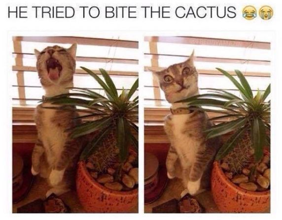 Me-ouch! | Follow us for more fun pet videos and photos @gwylio0148