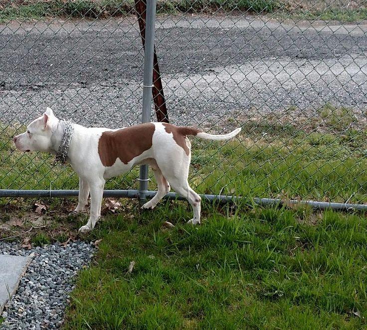 North Stonington Animal Control added 2 new photos. April