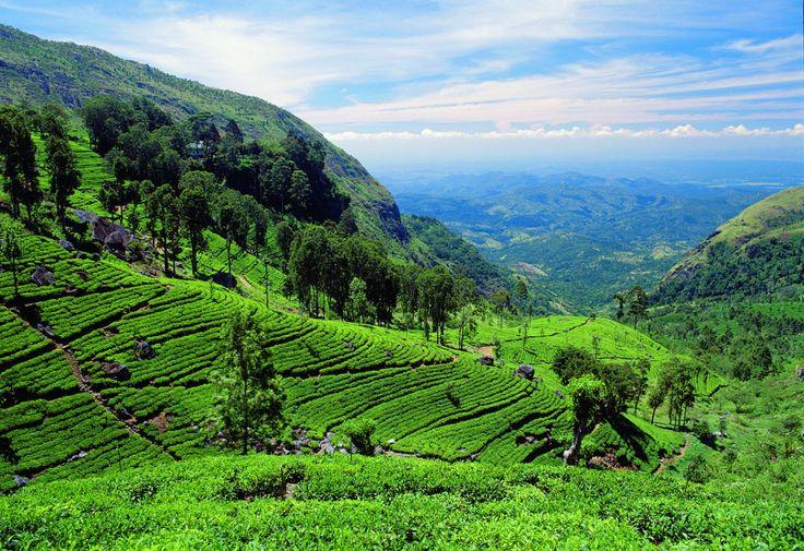 Le Sri Lanka est un paysplutôtméconnu des touristes en général. Il faut dire que la concurrence est rude en Asie avec des pays accessibles comme la Thailande, le Cambodge, le Vietnam, … Nous allons pourtant voir aujourd'hui 3 bonnes raisons de se rendre au Sri Lanka des demain, en tour du monde comme en voyage …