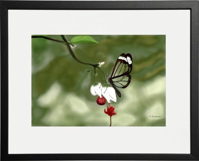 Farfalla ali di vetro. greta oto.