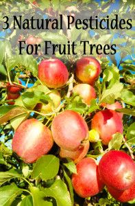 Apples on the bough…natural pesticides for fruit trees
