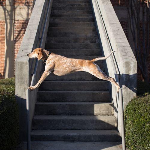 Maddie on things, el libro: o cómo hacer feliz a un humano perruno   SrPerro.com, la guía para animales urbanos.