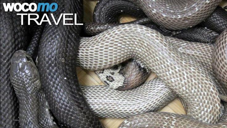 Im Norden Vietnams teilen die Einwohner des Dorfes Vinh Son ihr Leben mit Tausenden Schlangen. Viele der Tiere sind hochgiftig. Die Bewohner leben vom Geschäft mit den gefährlichen Reptilien und sind sogar stolz darauf.   #ARTE #GEO-Magazin #GEO-Reportage #giftige Schlange #Giftschlange #Hanoi #Nordvietnam #PLAY_GEO_GF #schlange #schlangen #Schlangenbiss #Schlangengift #vietnam