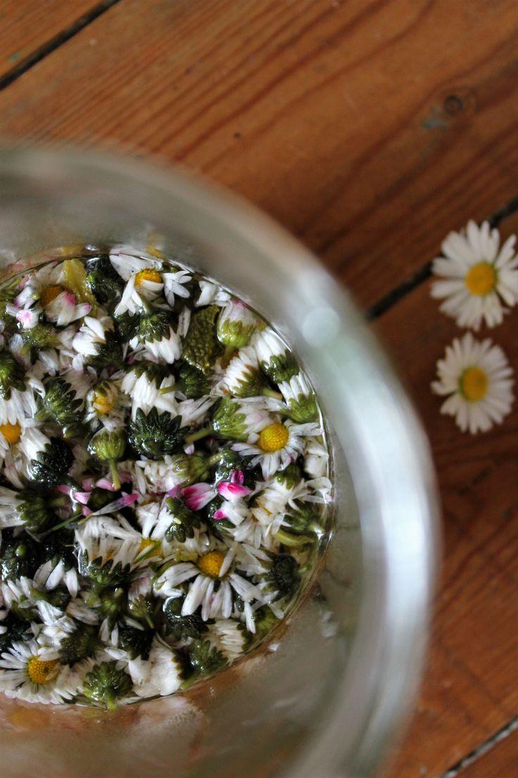 Syltede bellis blomster   Hoffgaards