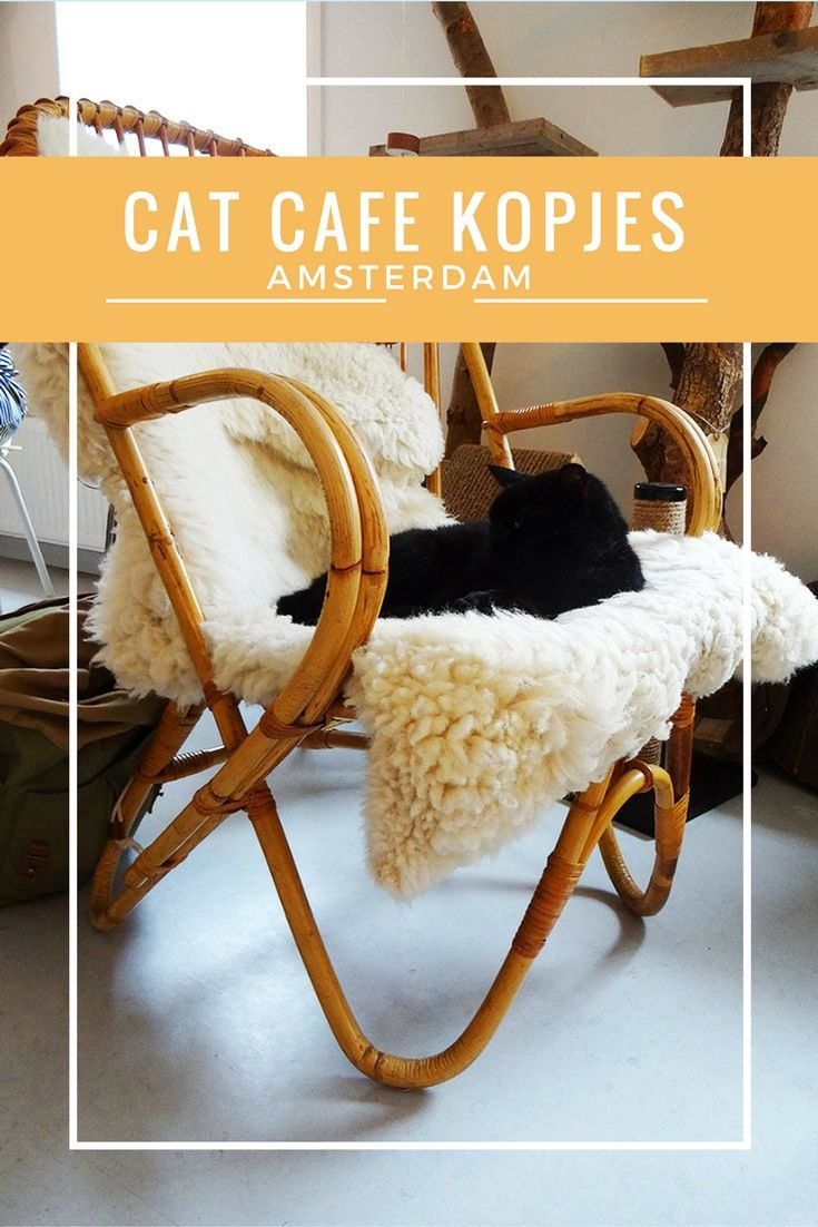 Last year Amsterdam's first cat cafe Kopjes opened its doors! This super cosy cafe is lovely decorated and feels like the perfect living room with 8 furry friends. Cat cafes open their doors all over the world. After European cities Berlin, Copenhagen, London and Paris it was Amsterdam's turn!