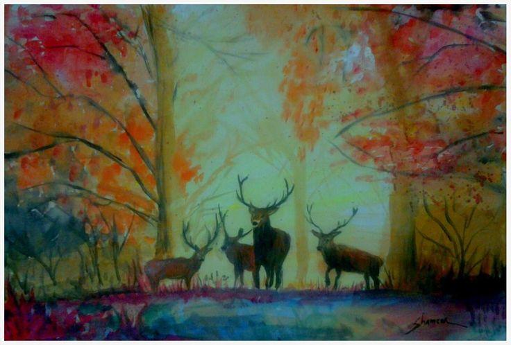 morning deers