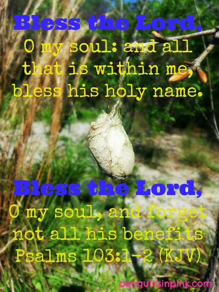 Bless the Lord - Sharing just one of my 10,000 Reasons to sing today.  Come share yours. Psalm 103 1-2 (KJV): Bless the Lord, O my soul: and all that is within me, bless his holy name. Bless the Lord, O my soul, and forget not all his benefits