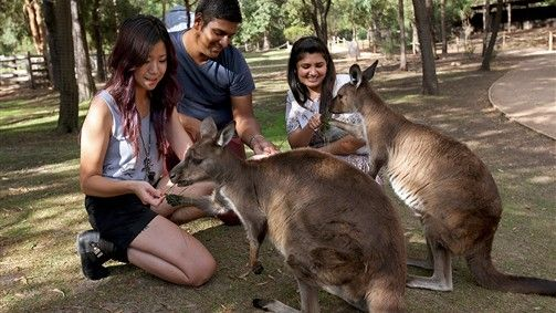 Kangaroo magic moment